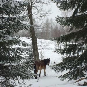 En tvåtimmarspromenad i ett vinterlandskap är mumma för själen.